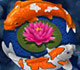 lucky-koi-icon